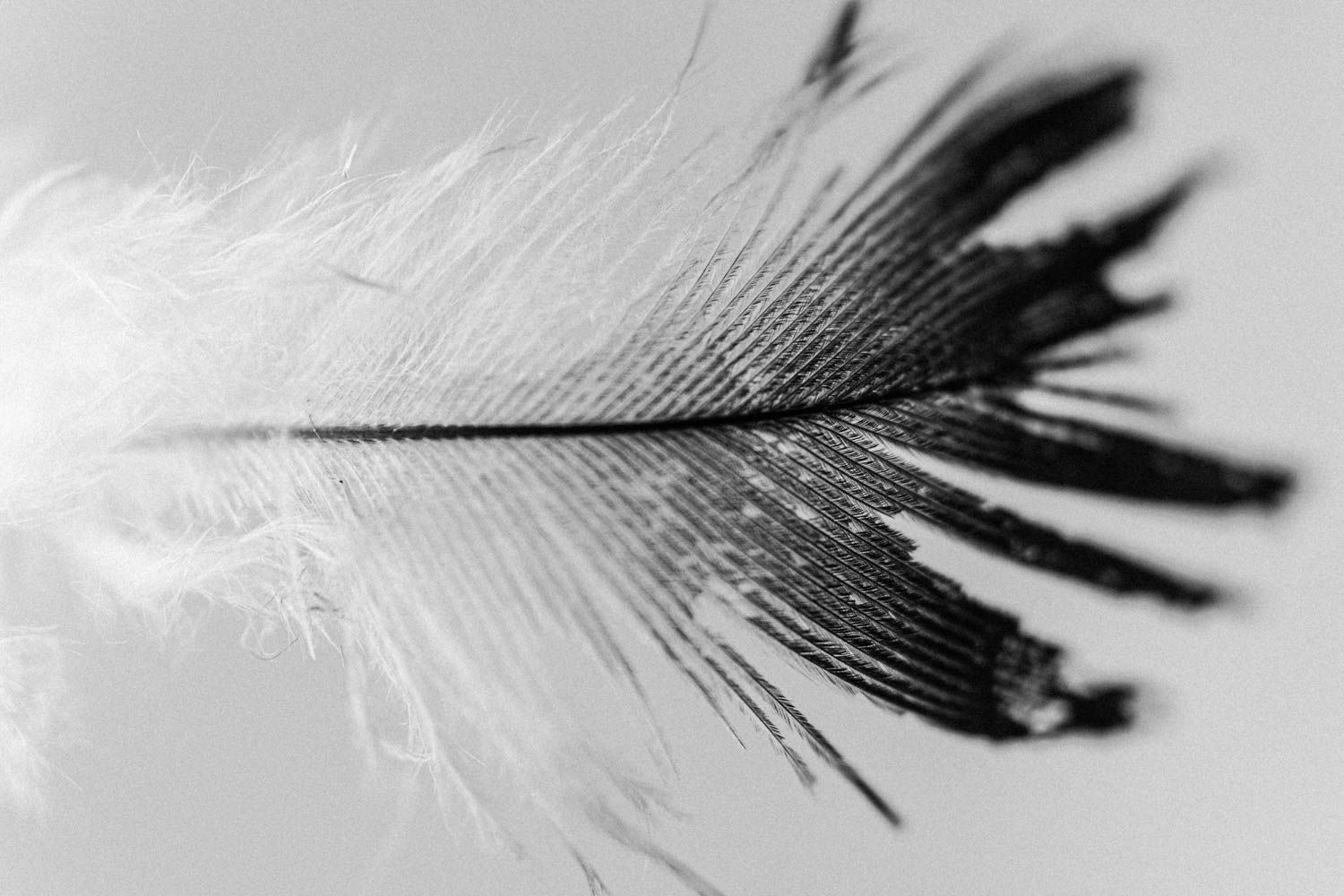 Black and white feathers fine art photo photograph